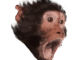 squizzy is now monke