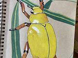 Composition of gold smith beetle
