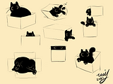 Cat in Boxes