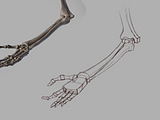 Joints Study 6