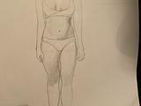 Basic proportions
