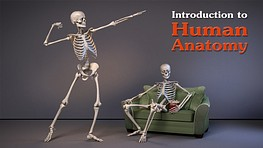 Introduction to Human Anatomy for Artists
